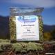 Ladies Mantle (leaf + flower) Tea